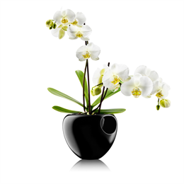 Eva Solo Selfwatering Orchid Pot
