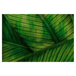Glamora Glamdecor Leaf